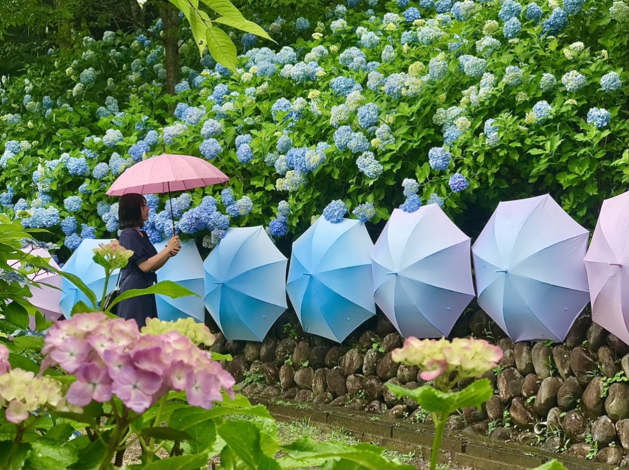【風鈴×あじさい×傘】 風物詩が詰まったインスタ映えスポット 尊永寺①_1