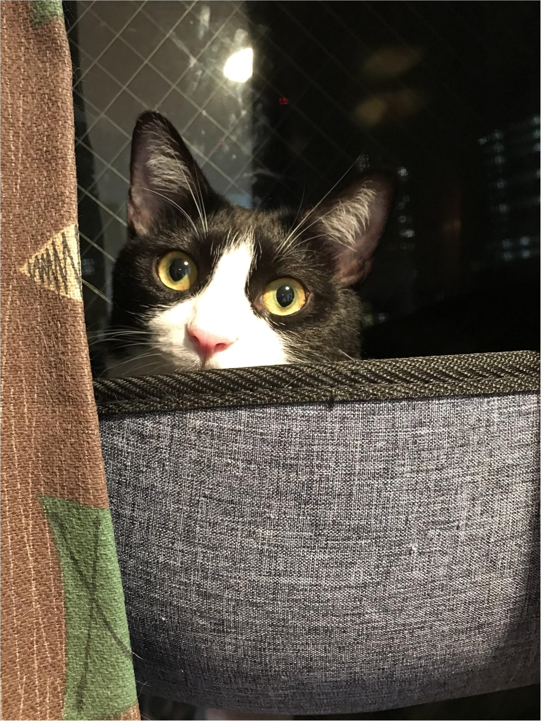 【今日のにゃんこ】発見! 窓辺の箱に入っていたルウくん_1