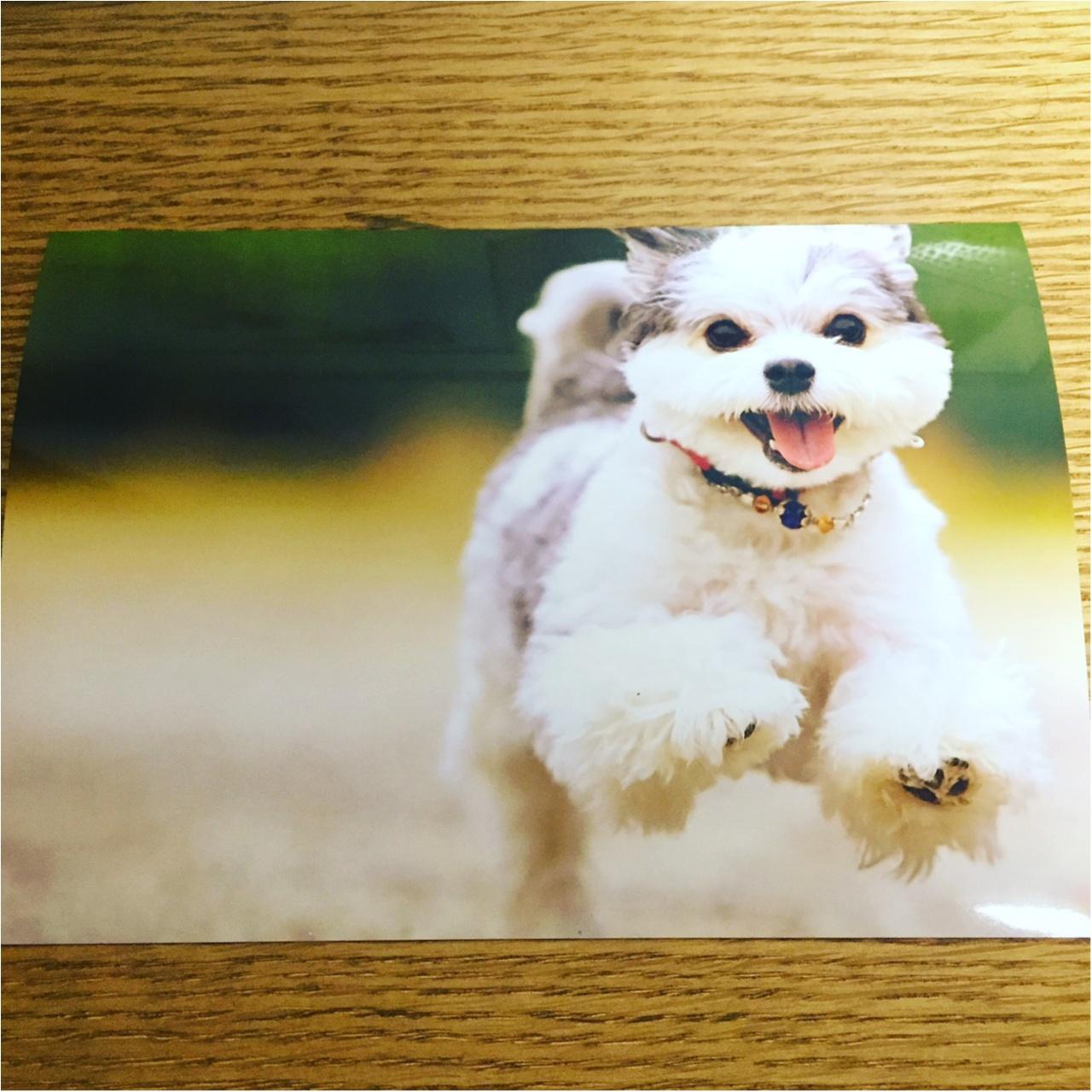 【今日のわんこ】幸せなときを切り取って♪ 太郎くんの思い出写真_1