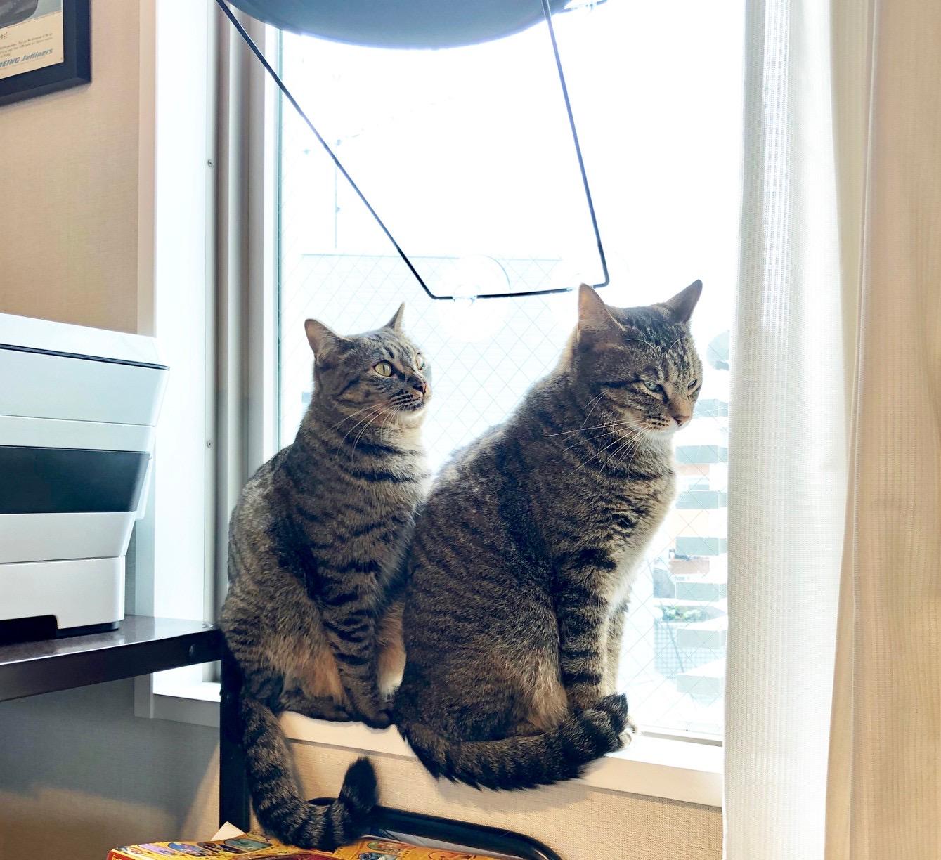 仕事部屋の窓辺でお外を監視中のサンちゃんとがんくん