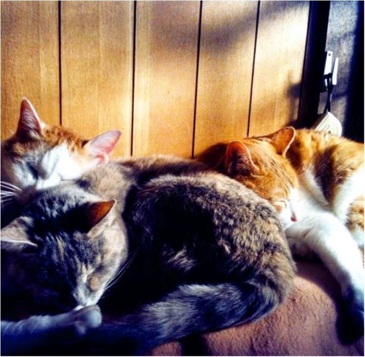 猫好き集まれっ♡ 今日のにゃんこ✳︎モアハピver♡_1