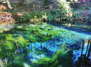【女子旅】煌めく水面が幻想的!名水百選にも選ばれた水源が綺麗♡