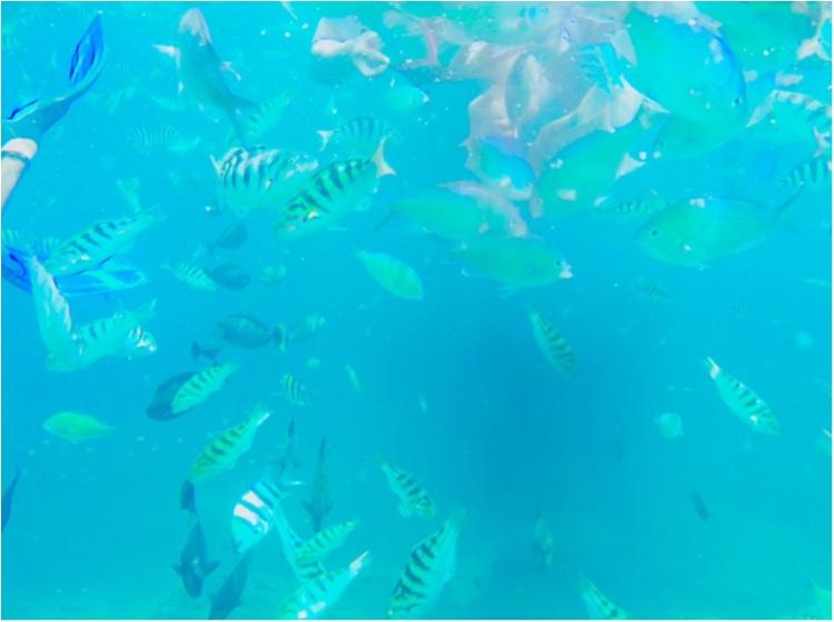 【TRIP】旅好き必見!プロトラベラーの間でも話題。「DREAM BEACH」☆ 夢の海に行ってきました。 _6