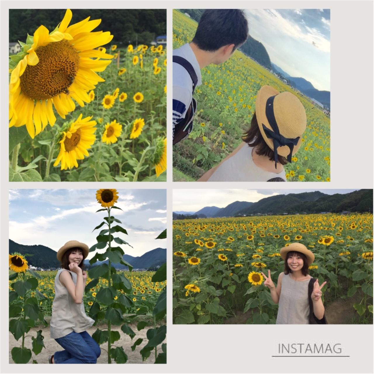 夏だ!8月だ!満開のひまわり畑へ!_12