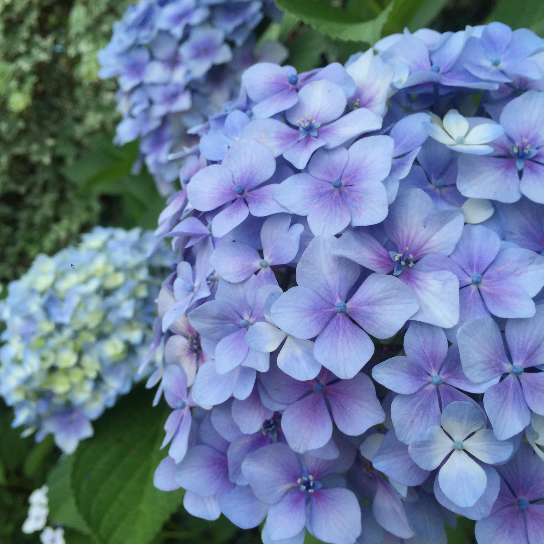 【京都】紫陽花を探しに東福寺へ、、思わぬ絶景に感動♡_3