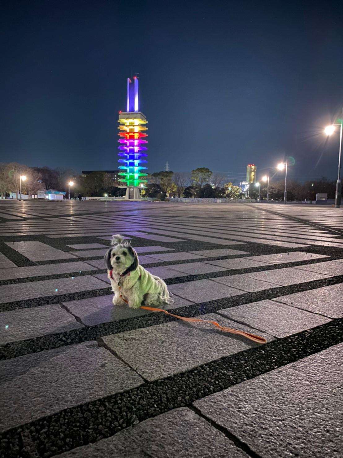 【今日のわんこ】太郎くんもアガる! 虹色の夜景_1