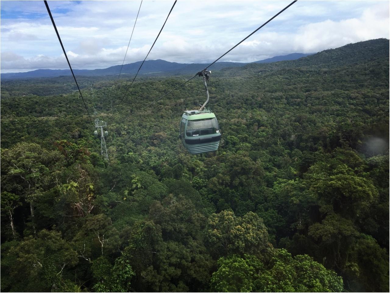 海も森林も大自然をまるっと満喫するなら《オーストラリア・ケアンズ》へ!_7