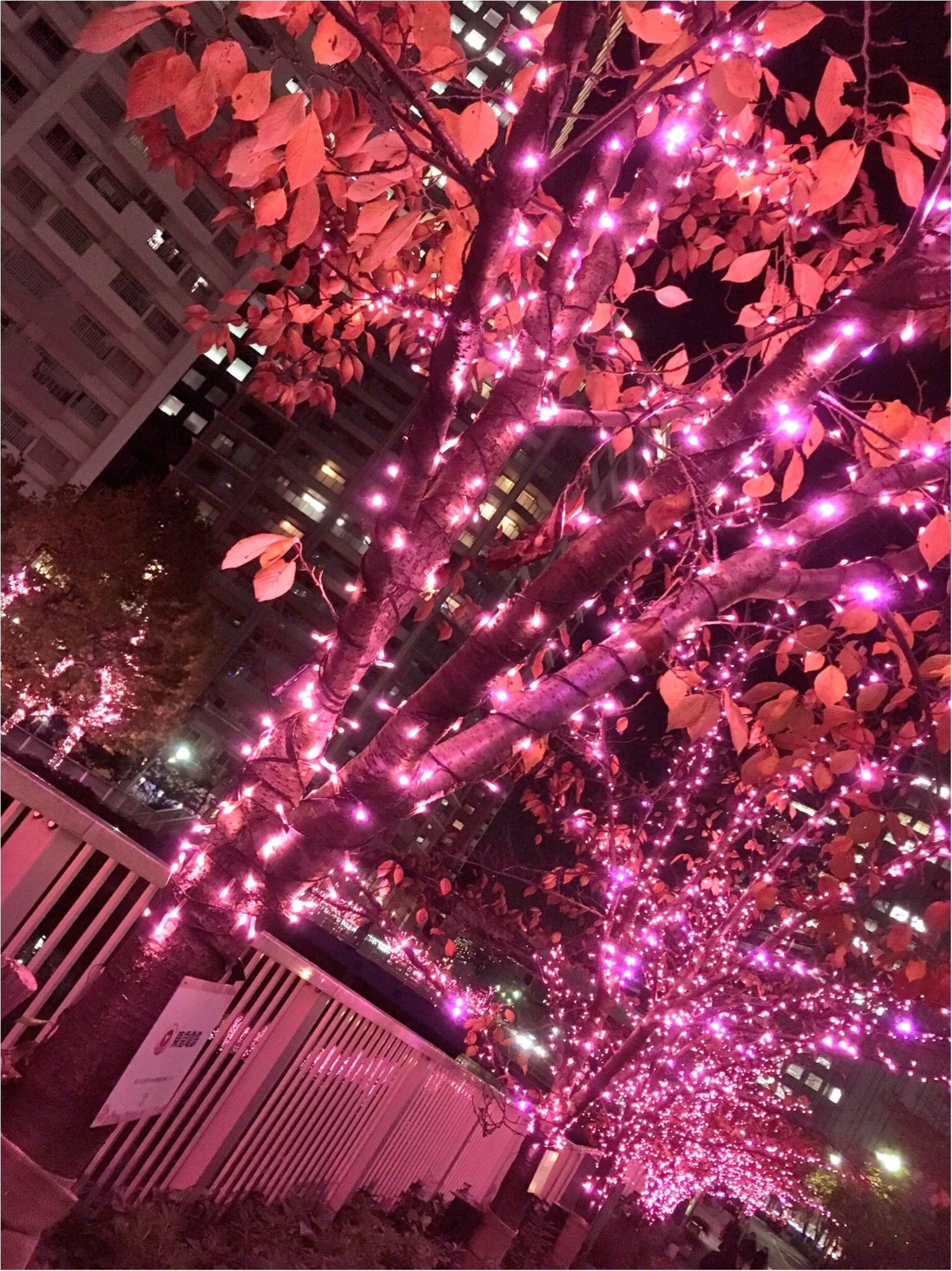 『目黒川』に『冬の桜』が咲きました(*°○°*)♡最新の『環境にやさしいイルミネーション』って???_5