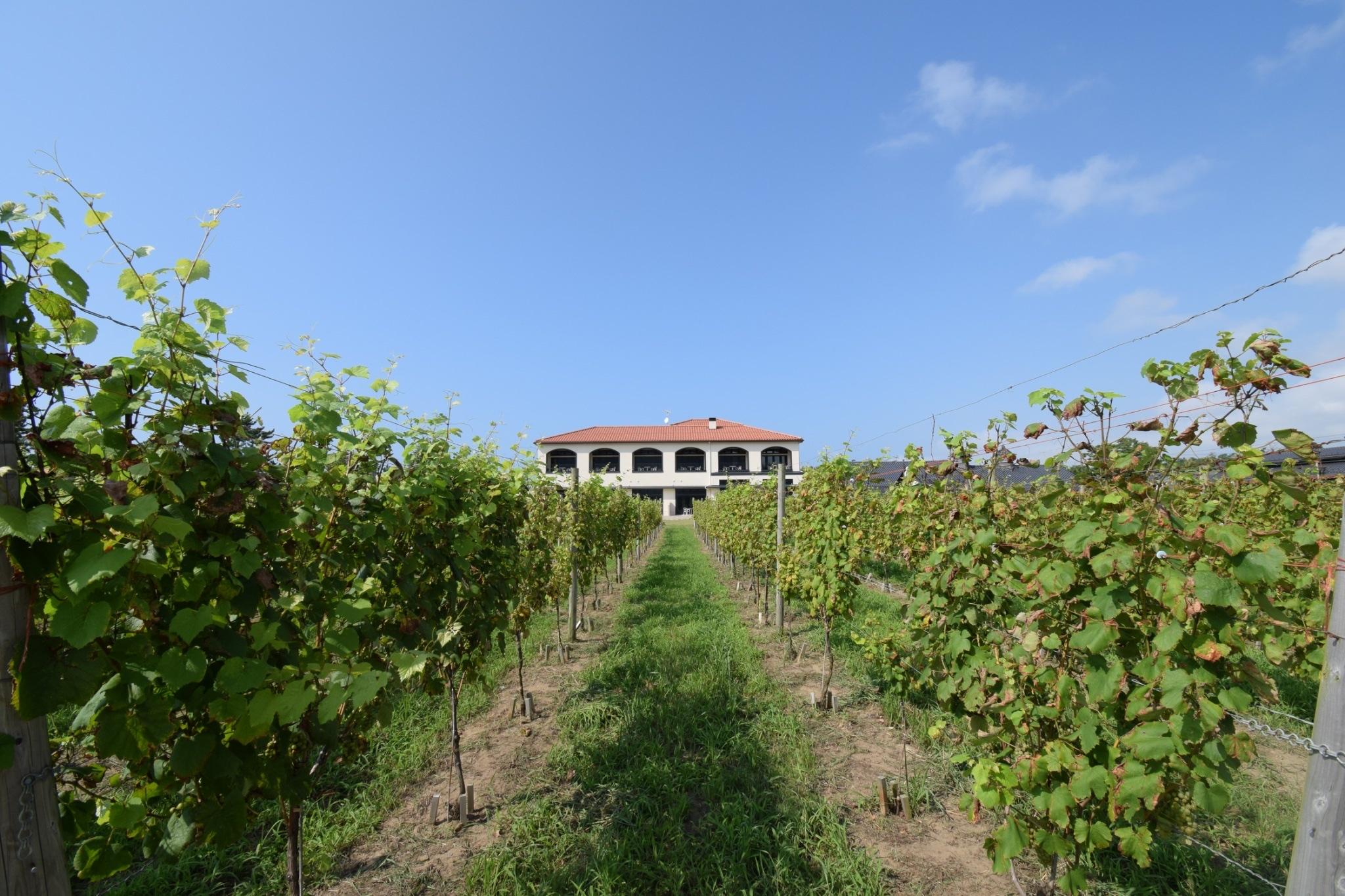 【女子旅におすすめ】ワイン好きさん必見♪葡萄畑を眺めながらゆったりワイナリーステイ♡_1