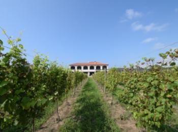 【女子旅におすすめ】ワイン好きさん必見♪葡萄畑を眺めながらゆったりワイナリーステイ♡