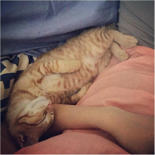 【今日のにゃんこ】子猫のぽぽくんは、ママの腕枕でおねむです♡_1