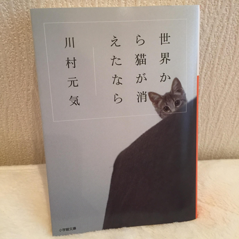 消え が から た なら 世界 猫