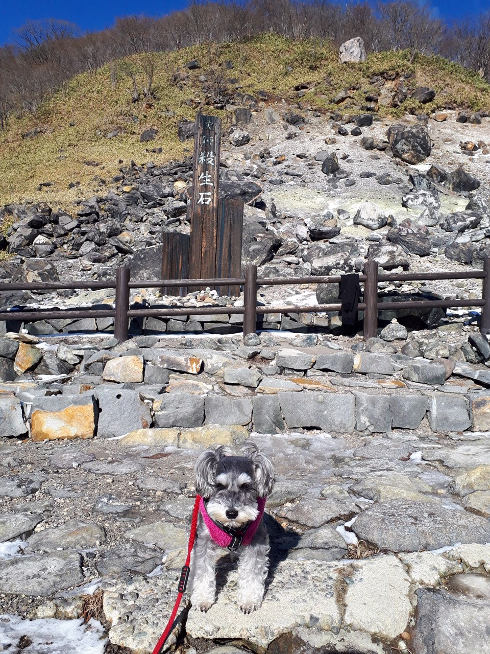 栃木県・那須温泉にある「殺生石」の前で写真を撮るサクラちゃん