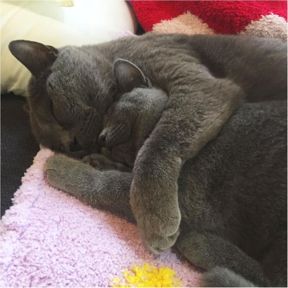 【今日のにゃんこ】冷え込む夜はギュッ♡ 抱き合って寝るムクくん&レオくんが可愛すぎる!_1