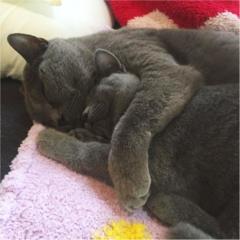 【今日のにゃんこ】冷え込む夜はギュッ♡ 抱き合って寝るムクくん&レオくんが可愛すぎる!