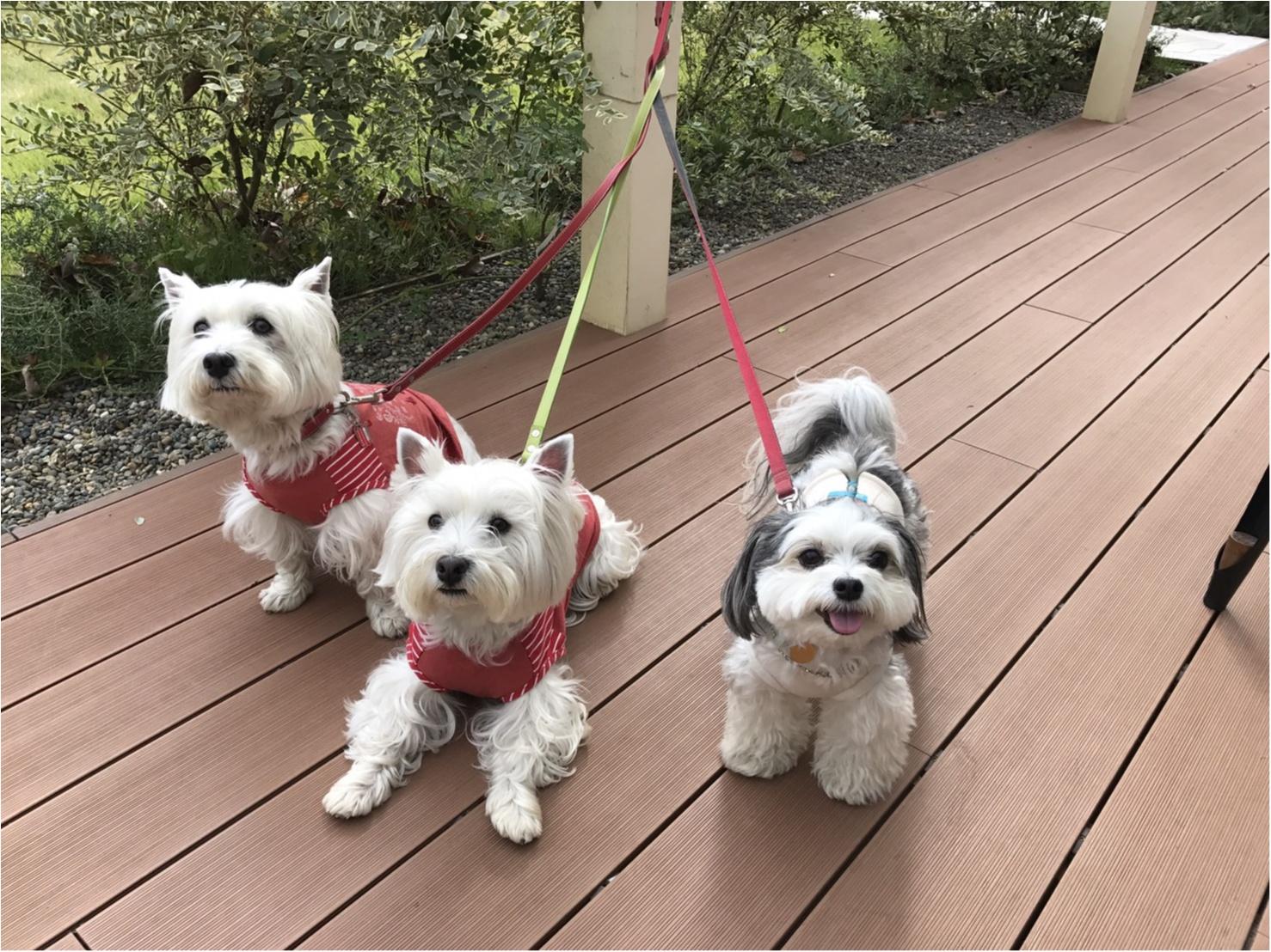 【今日のわんこ】友達といっしょなら♪ お散歩途中の太郎くん_1