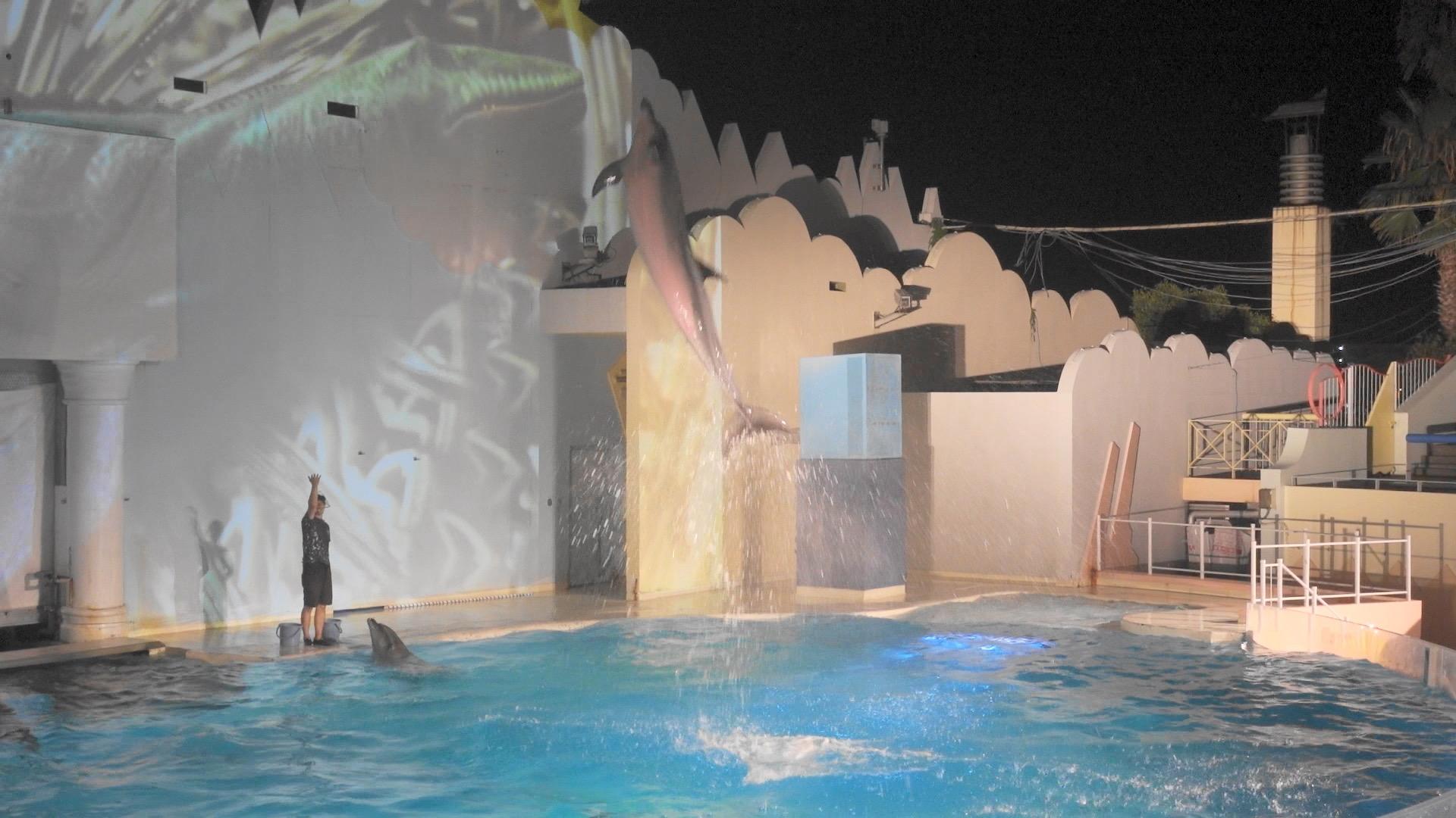 【神戸・須磨】夜の水族館!夏季限定ナイトイルカショーがやっている『須磨海浜水族園』へいってきました【8/30まで】_1
