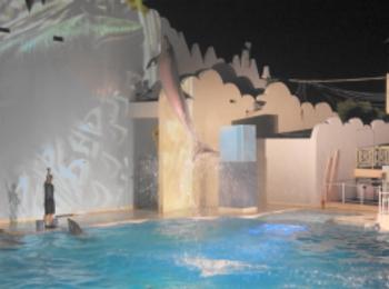 【神戸・須磨】夜の水族館!夏季限定ナイトイルカショーがやっている『須磨海浜水族園』へいってきました【8/30まで】