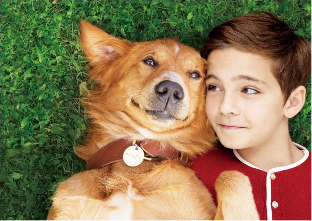 犬好きなら涙腺崩壊! 3度生まれ変わる犬のドラマを描いた映画『僕のワンダフル・ライフ』_1