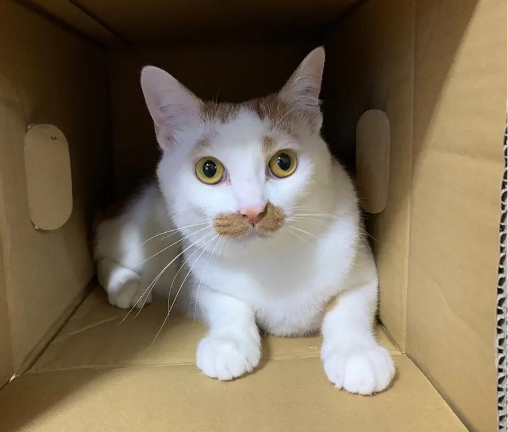 雑種猫・ラビくんのプロフィール写真