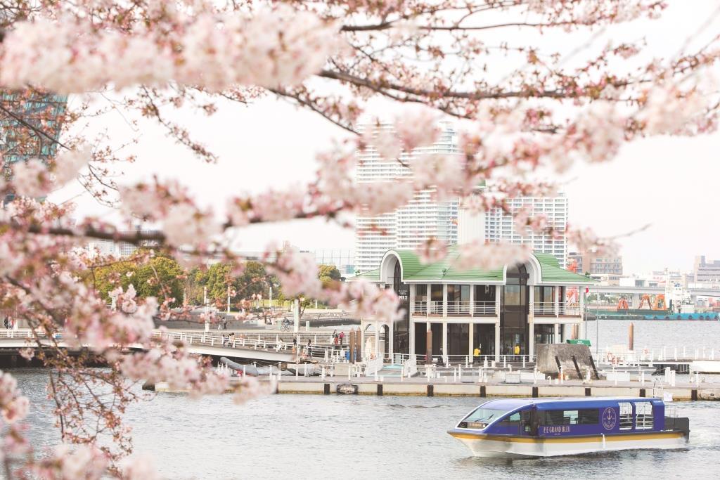 約600本の桜のトンネルをくぐりながら船上お花見♡ みなとみらい「大岡川桜クルーズ」が素敵すぎる!【#桜 2019 13】_1