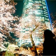"""【しの散歩】東京の """"桜"""" の見頃は、もうすぐそこ!都内のおすすめ『お花見スポット』3選をご紹介 ♪"""