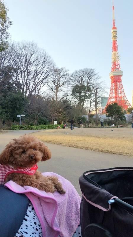 【今日のわんこ】テテちゃん、東京タワーのそばでランチタイム_1