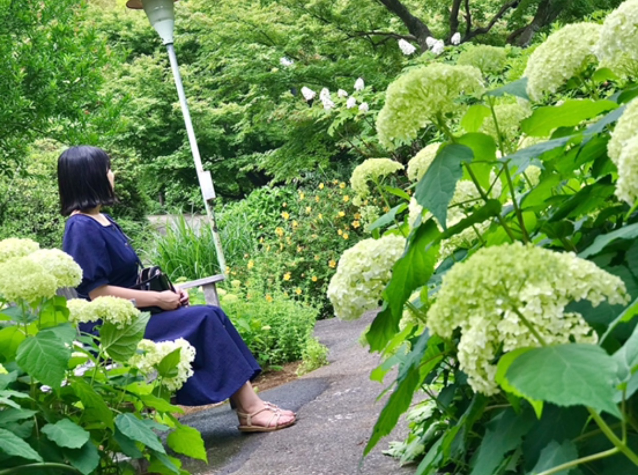 【デートにも女子旅にもおすすめ】 白いあじさい畑×静かな茶室でのティータイム _5