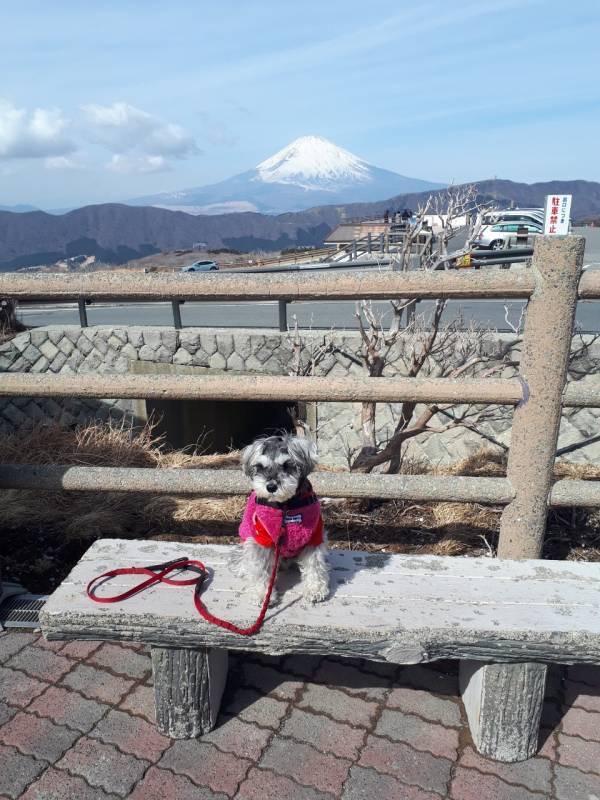 富士山を背景に写真を撮る犬・サクラちゃん