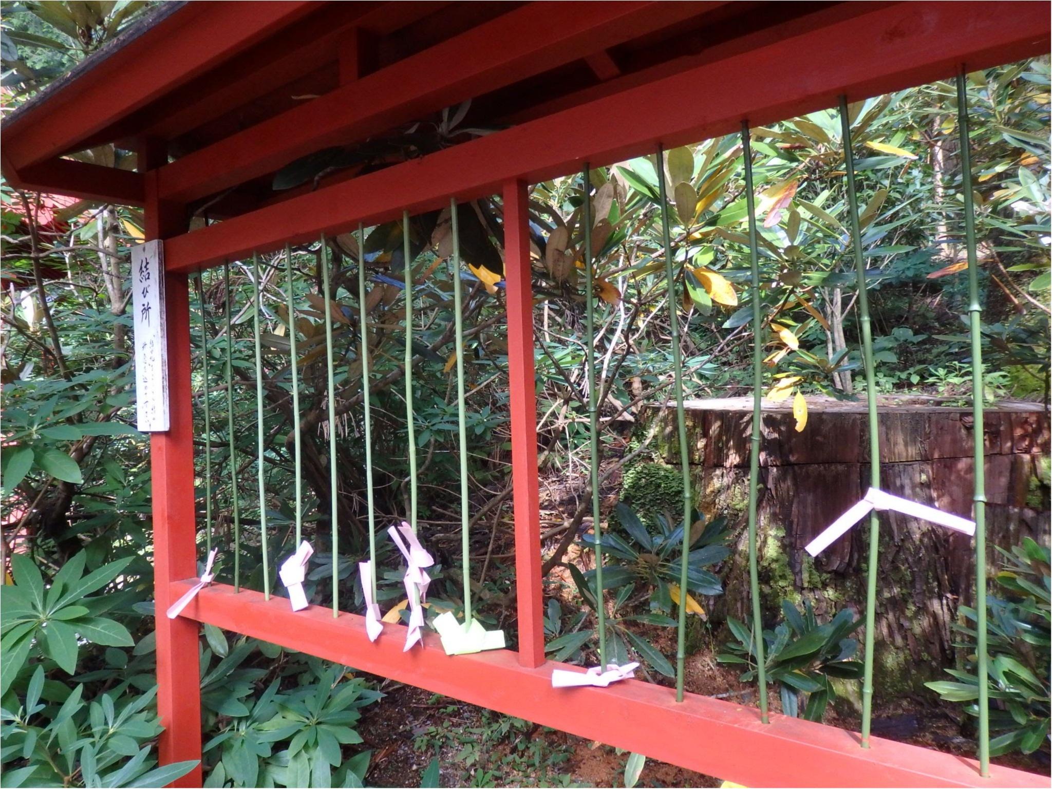 【知らなかった!】日本一楽しめる神社へ潜入してみた_36