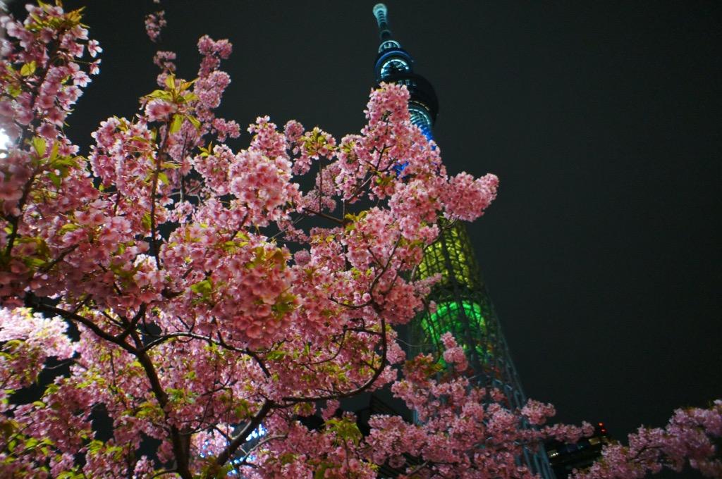 《ひと足お先にお花見❤️》【都内】で楽しめるおすすめの夜桜スポットはココだ☝︎❤︎_3