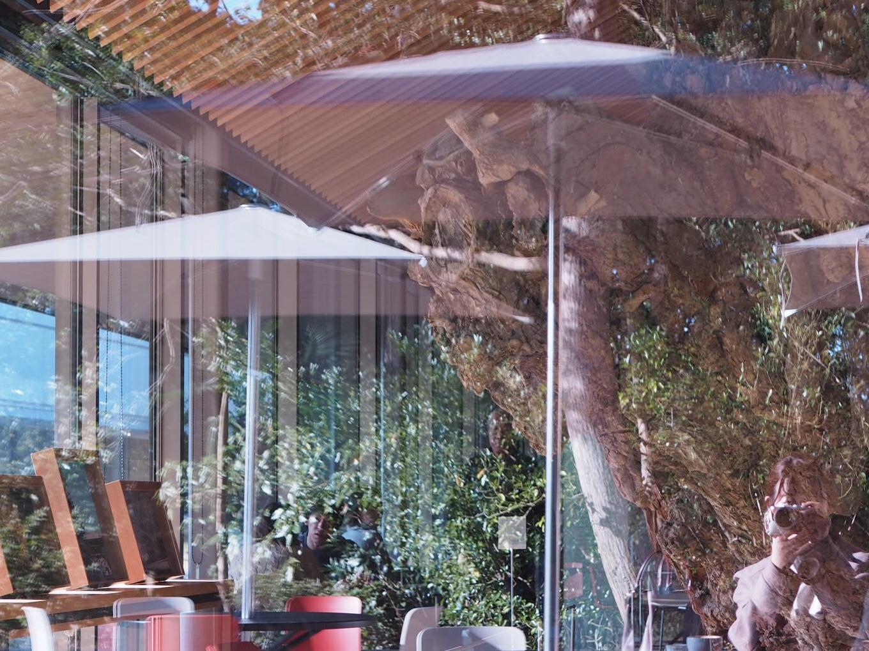 【#秋の鎌倉さんぽ】紅葉の鶴ヶ丘八幡宮♡ あの銀杏に会えるカフェ。_11