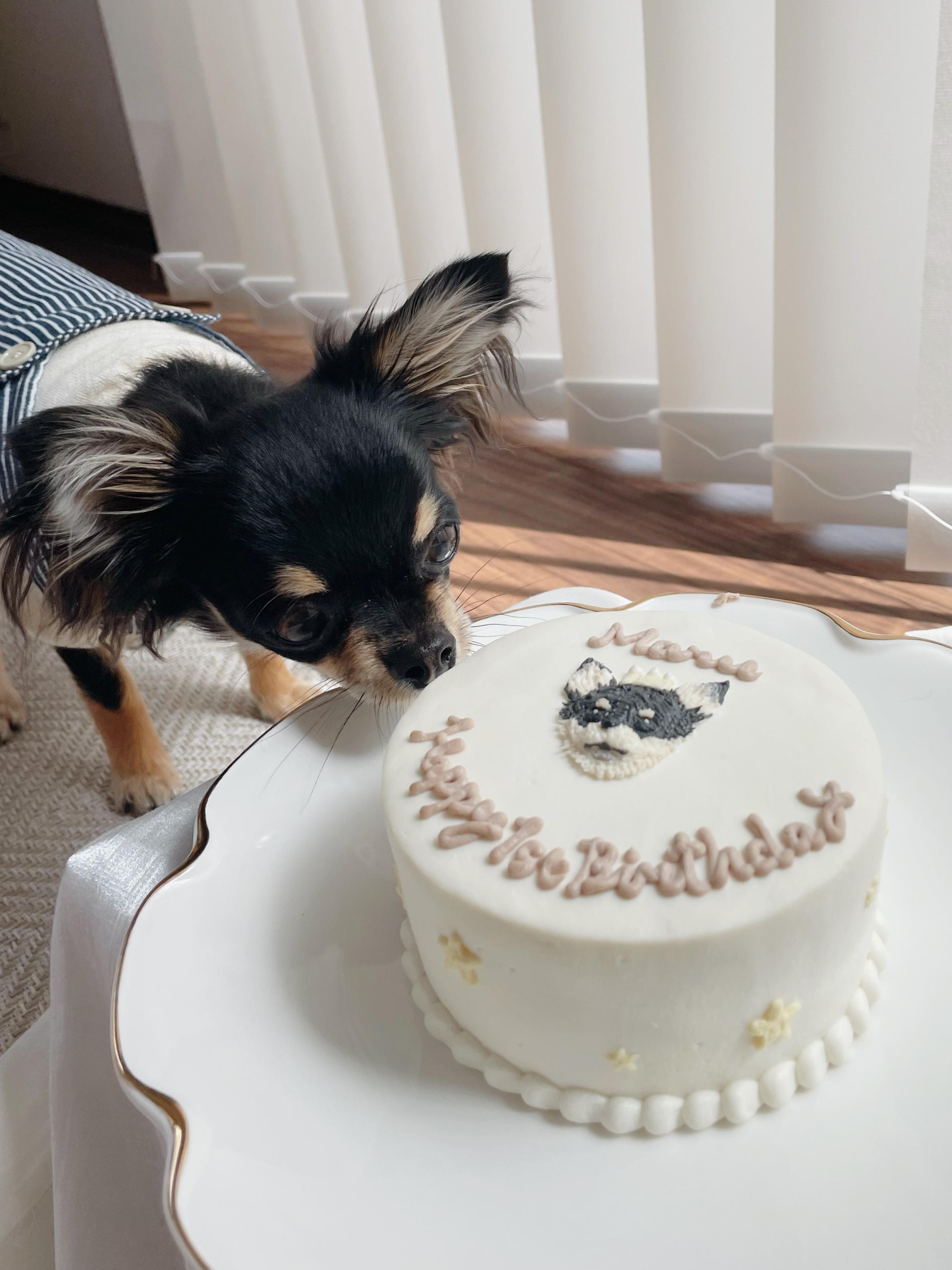 【我が家のペット】愛犬まるちゃんお誕生日を迎えました!_5