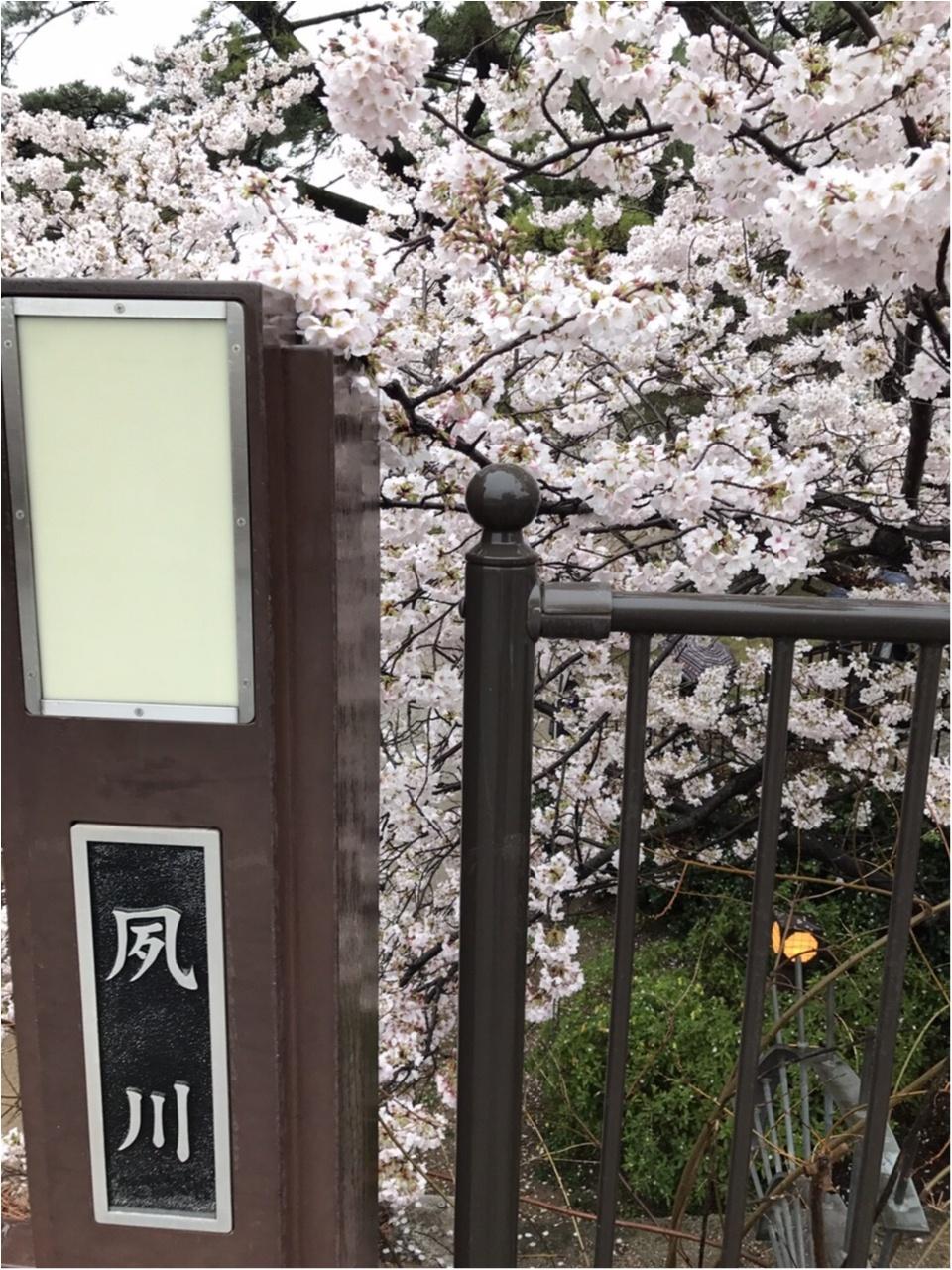【関西お花見スポット】「日本さくら名所100選」にも選定!夙川に映る桜が美しい♡_1