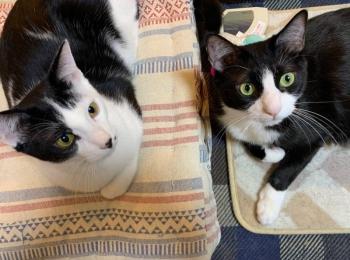 【今週のにゃんこ】仲良し! 猫三兄弟の日常をのぞき見