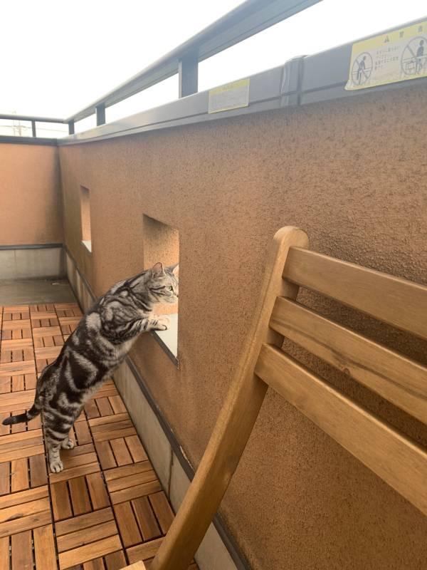 ベランダから外を眺める猫・ソラくん