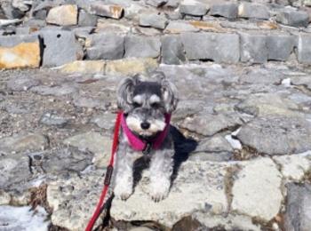 【今日のわんこ】サクラ、那須温泉でこわ〜い名の石を見つけ固まる