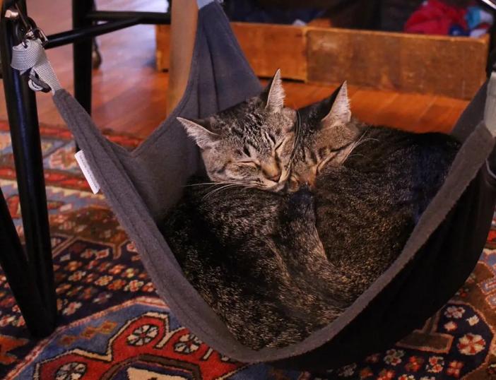にゃんもっくの中で眠る2匹の雑種猫・がんくんとサンちゃん