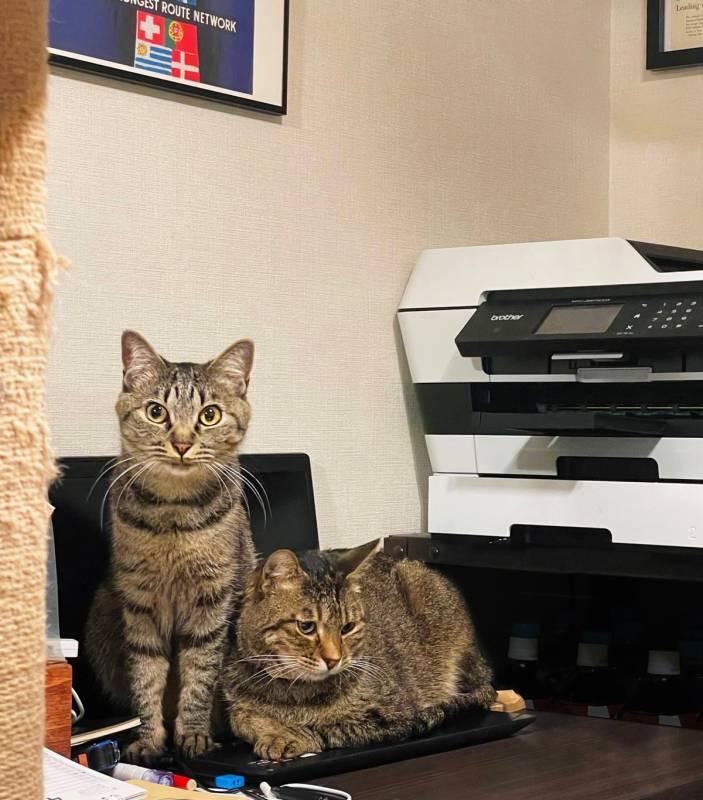 パソコンの上に座る2匹の猫・がんくんとサンちゃん