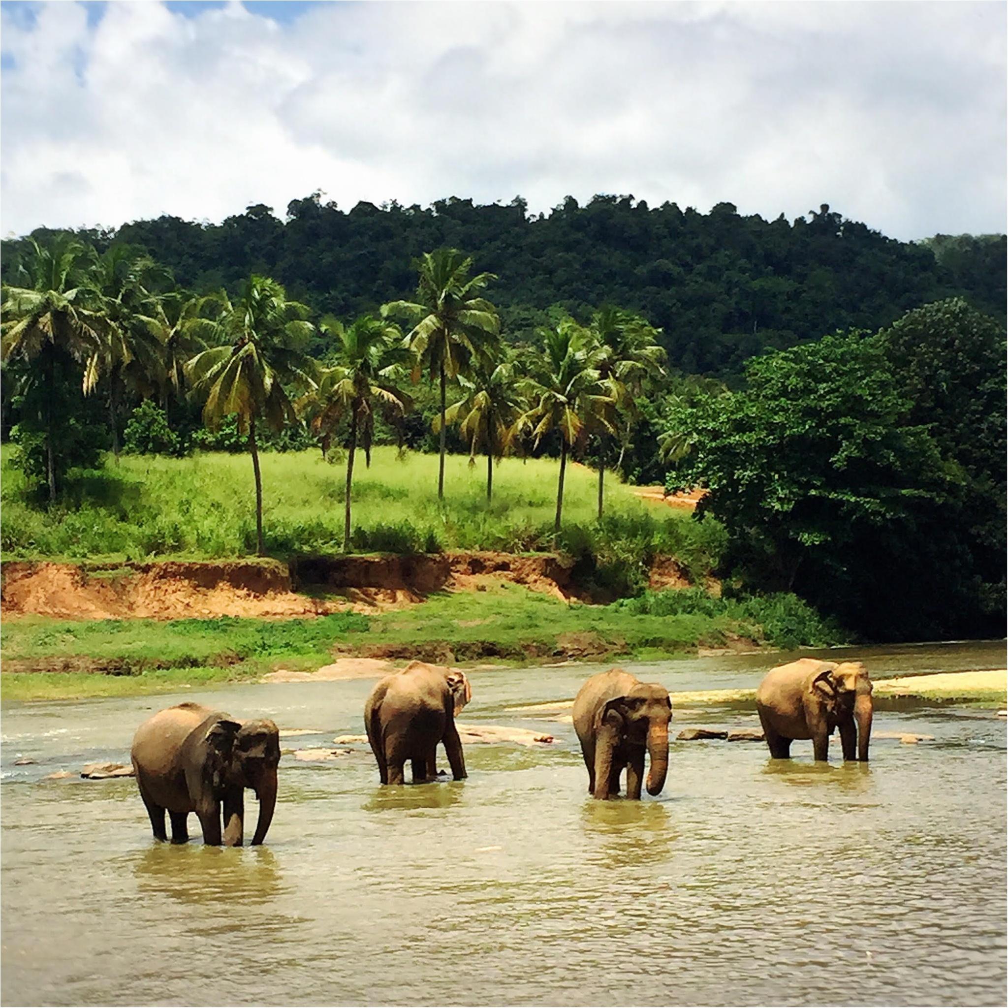 海外旅行でおすすめの癒しの国「スリランカ」♡_1