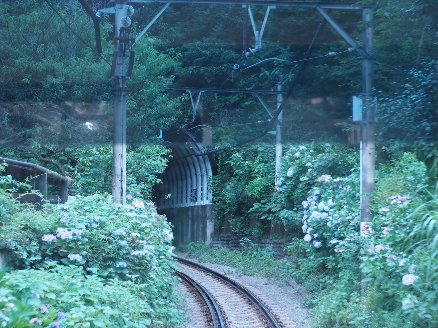 【6月鎌倉旅】#明月院ブルー あじさいの旅♩ _8