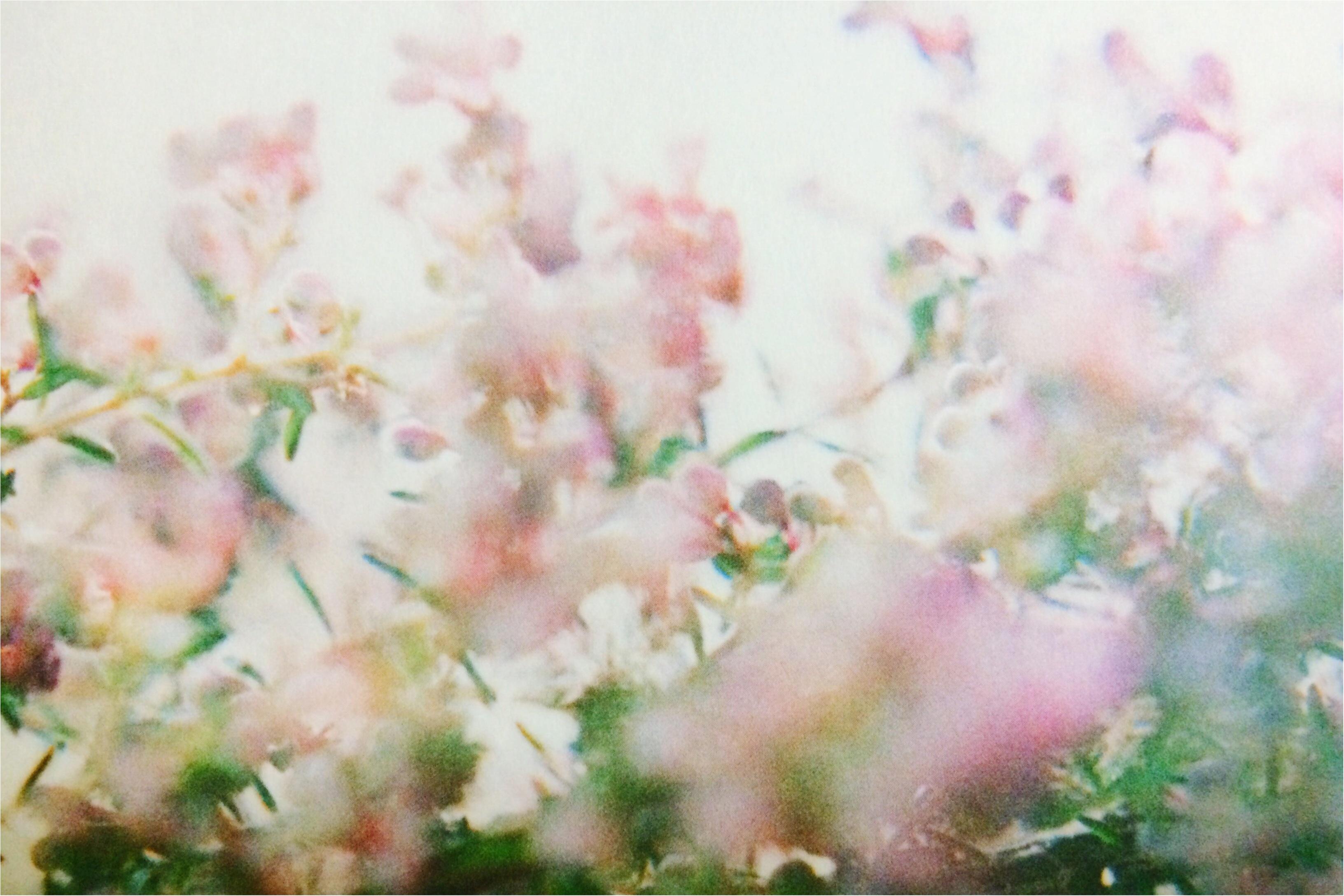 【*COSMETIC*】癒しのオーガニックコスメ〜ローズの香り_3