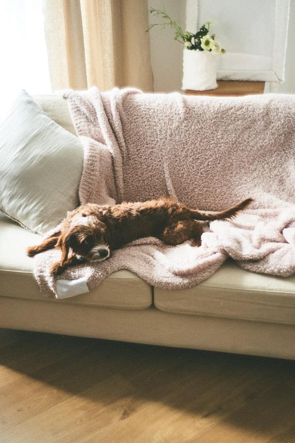 『ジェラート ピケ』の寝具ライン「gelato pique sleep」。「Sleep マルチカバー」をソファーカバーとして活用した様子
