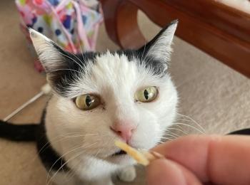 【我が家のペット】MOREにも一緒に出させていただいた、まったりおばあちゃん猫をご紹介♡