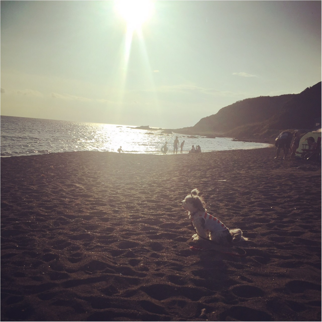 【今日のわんこ】なんだかおセンチ。夏の海で黄昏る太郎くん_1