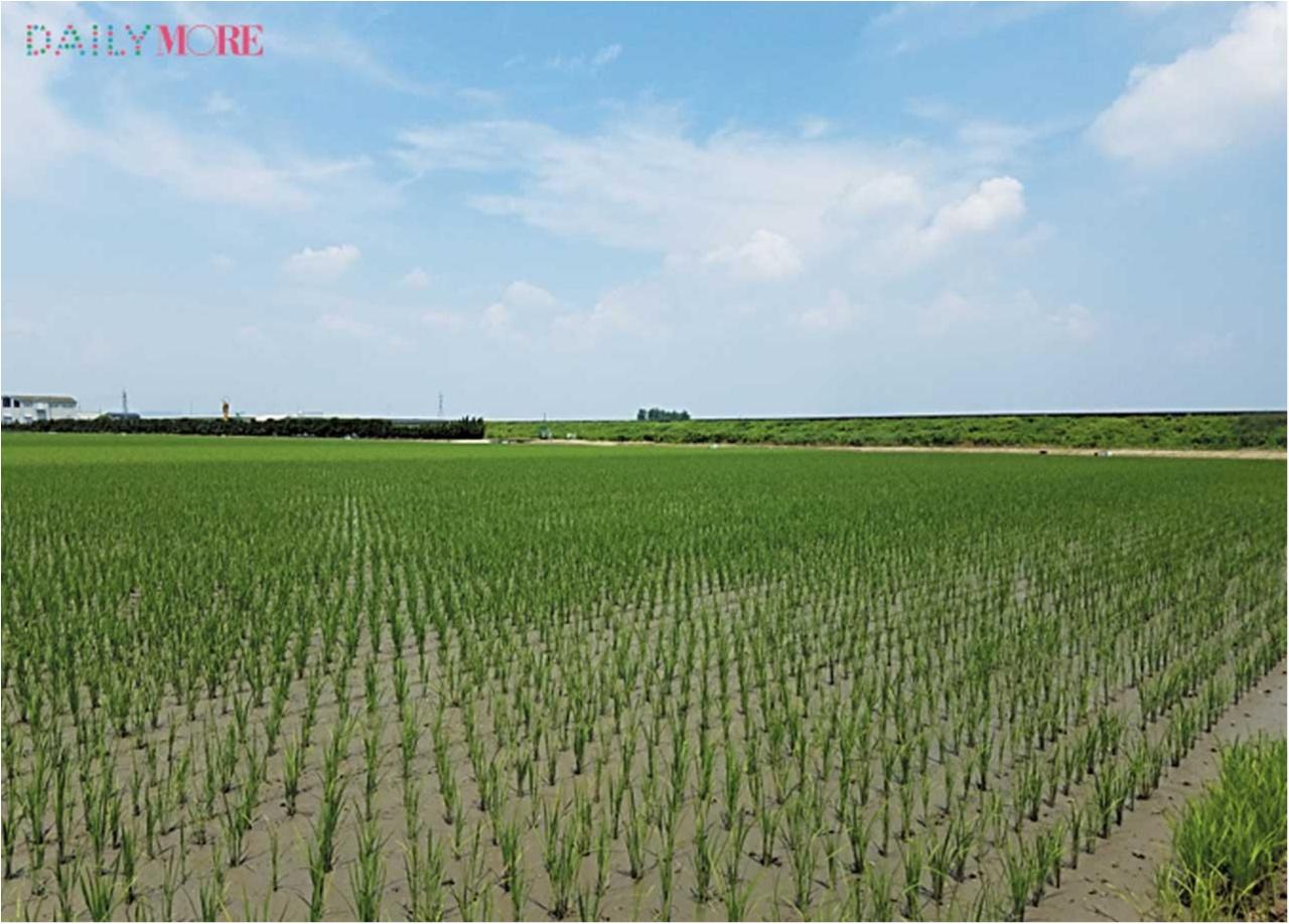 【動画もチェック】 はじめての「田植え」に密着! ひと粒のお米に込める愛情と手間ひま【#モアチャレ 農業女子チャレンジ】_2_6