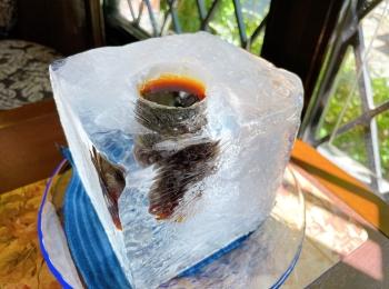【神戸・北野】話題沸騰!まさにアイスコーヒー