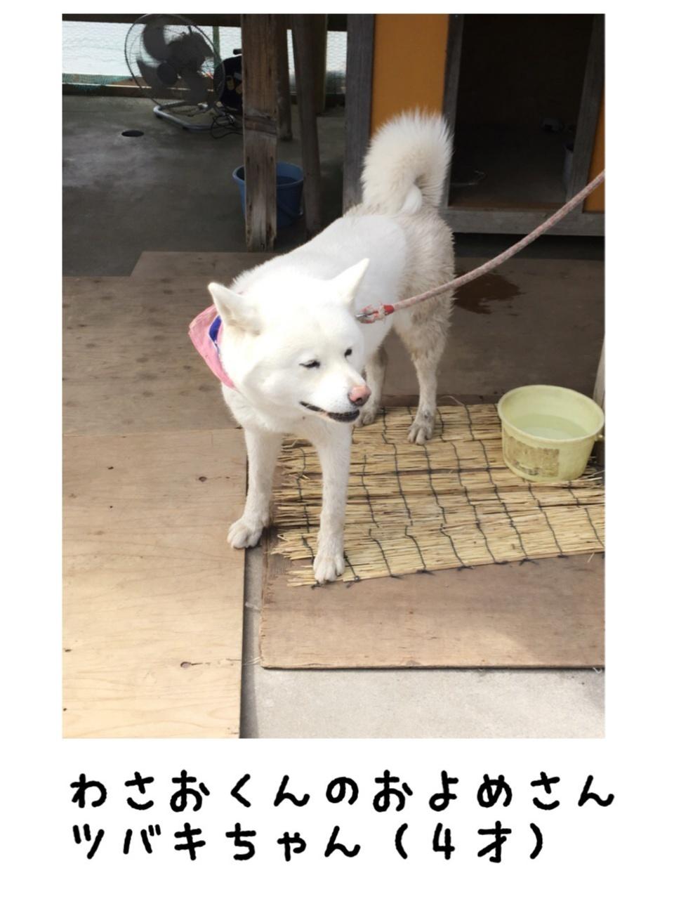 【ブサカワ犬わさお】に会える方法♡モアハピ◡̈のぞみ♡_6