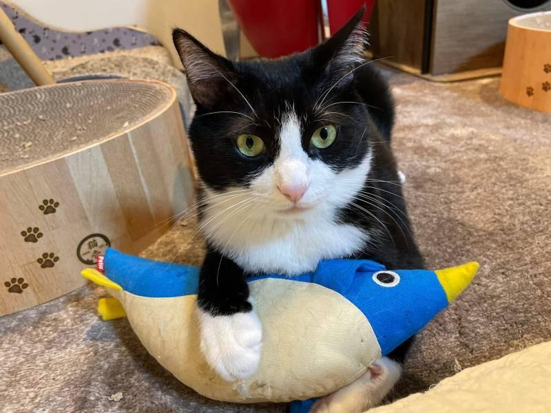 ペンギンのけりぐるみを抱えている猫・ルウくん