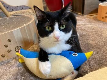 【今週のにゃんこ】「ペンギンは渡さにゃい!」と睨みをきかせる、ルウくん